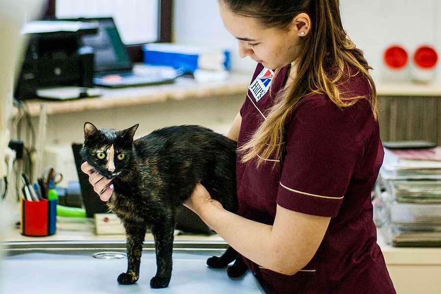 Терапія для тварин у ЛЬвові