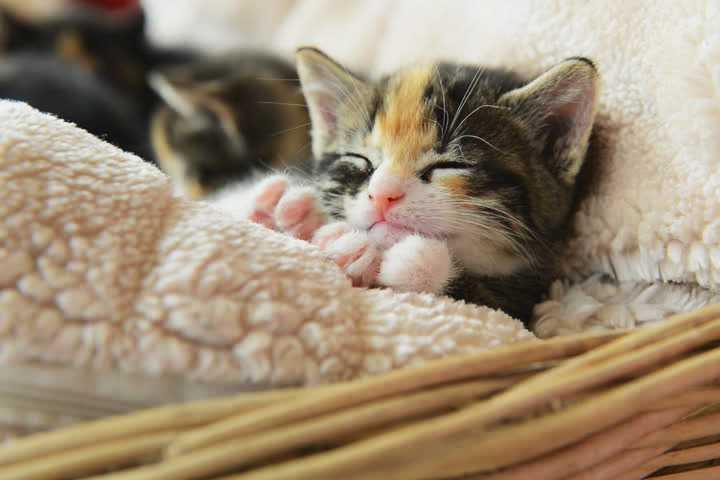 Догляд за кошеням