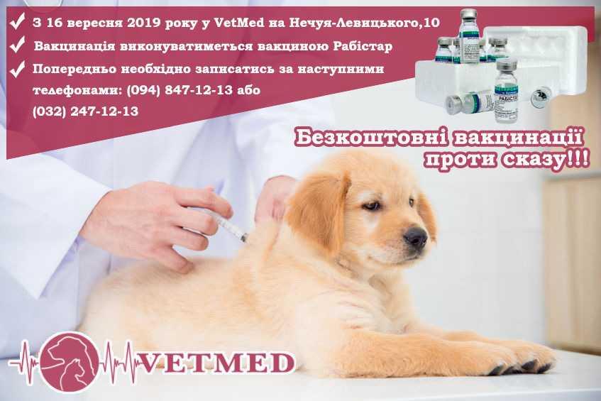 Безкоштовна вакцинація проти сказу у Львові