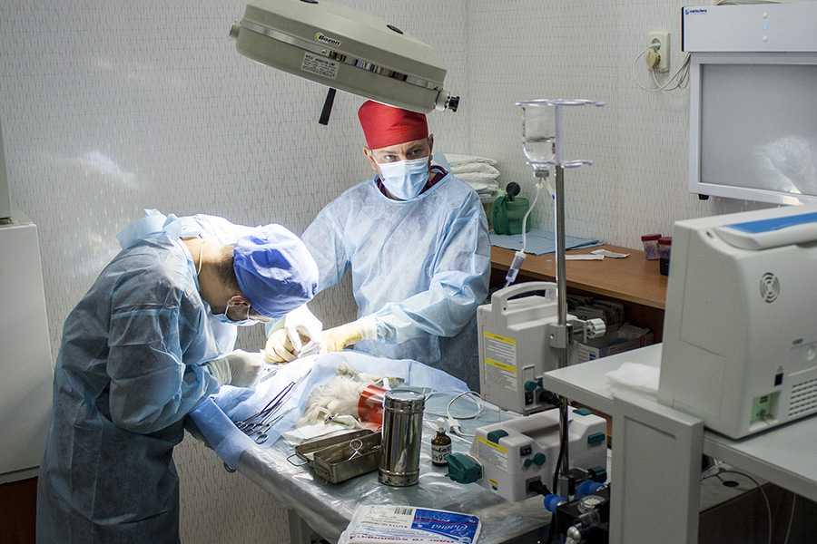 Хірургія для тварин у ЛЬвові