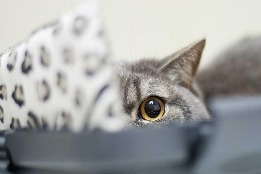 Правила транспортування котів